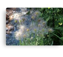 Withered Beauty in Dappled Sunlight Canvas Print