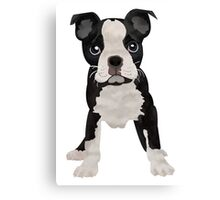 Mr. Boston Canvas Print