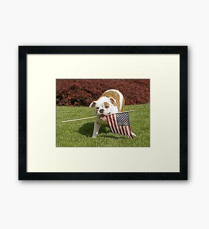 Yankee Doodle Doggie Framed Print