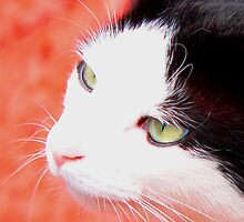 The Cat's Whiskers by Chris Armytage™