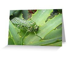 Silver-spotted Bladderhopper on an Aloe Greeting Card