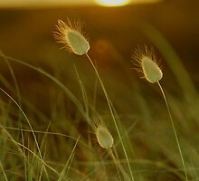 Bunny tails by donnz