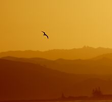 seagull sunset by donnz
