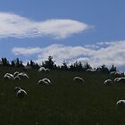 Sunshine on sheep - Near Tomintoul, Scotland by Pamela Baker