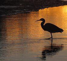 blue heron Ross creek yeppoon qld  by blakesart