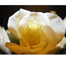 Thanks Giving rose. Photographic Print