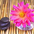 Tranquil Zen Stones And Dahlia by daphsam