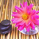 Tranquil Zen Stones And Dahlia by daphsam