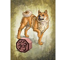 Year of the Dog Photographic Print