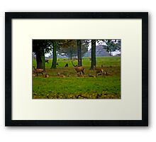Woodland Scene - Red Deer Framed Print