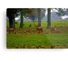 Woodland Scene - Red Deer Metal Print