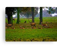 Woodland Scene - Red Deer Canvas Print