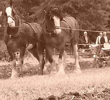 plowing by Dani Hughes
