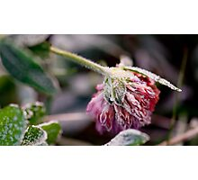 Little treasure in the cold Photographic Print