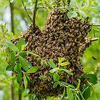 Bit of a swarm by Mark Bangert