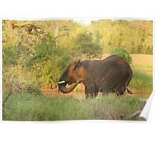 Bull elephant enjoying a mud bath Poster