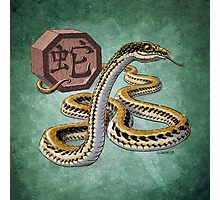 Year of the Snake - Dark Background Photographic Print