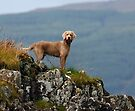 Bruno on Mull by SWEEPER