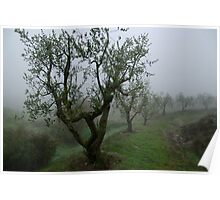 Misty Morning Amongst The Olive Trees Poster