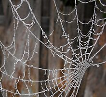 Icy Spider Web. by Lewkeisthename