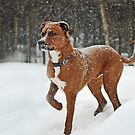 Where is that squirrel?? by Gisele Bedard