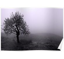Umbria Morning Poster
