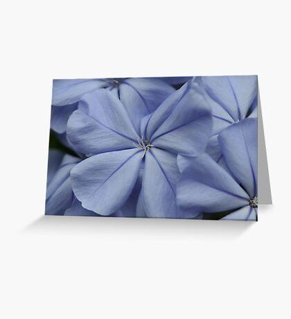 Plumbago Blossoms Greeting Card