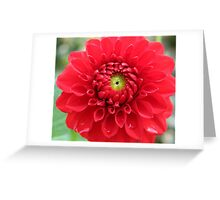 Red Dahlia Touched by Drops of Water Greeting Card