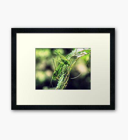 HDR Framed Print