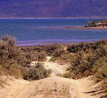 A Path of Sage by karolina