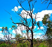Molonglo Gorge - Trekking the gorge 6 by Geoffrey Thomas