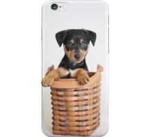 Awwdorable Animal Rescue Portraits - Hank the Minpin iPhone Case/Skin