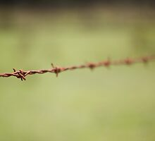 Barbed Wire by madcowgirl