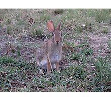 Easter Bunny in May,Texas Photographic Print