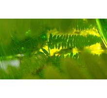 Plasma leaves serie n°2 Photographic Print