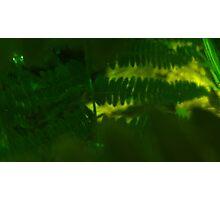 Plasma leaves serie n°3 Photographic Print