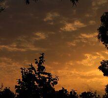 cloud & trees - maylands, sa by frogdude