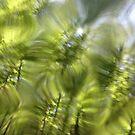Plasma leaves serie n°5 by edend