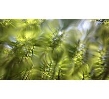 Plasma leaves serie n°5 Photographic Print