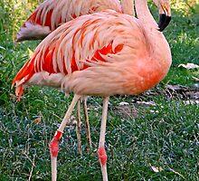Flamingo Twins by Al Bourassa