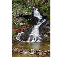 Flowing from the Clifford Tree Farm Photographic Print