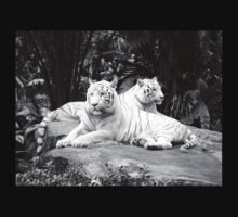 White Siberian Tigers T/shirt by brevans