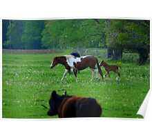 Galloping Together Poster