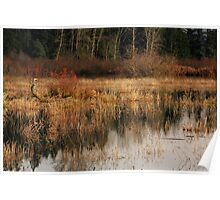 Master of the Marsh- Somenos marsh, Cowichan Valley Poster