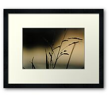 """Very Grassy"" (1/13) Framed Print"