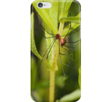 A tangle of legs - image 3 iPhone Case/Skin