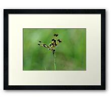 "(5/13) ""Ready, Set...."" Framed Print"