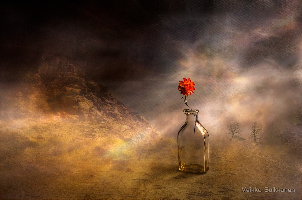 Flower and the bottle by Veikko  Suikkanen