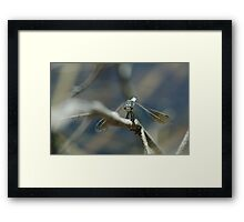 "(10/13) ""On Guard"" Framed Print"