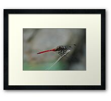 "(11/13) "" You Eyeballing Me?"" Framed Print"